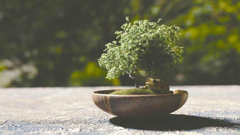 best bonsai tree